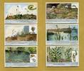 1932 Liebigbilder-Insektenfressende Pflanzen Liebig 1025# guter zustand  6,25 EUR  zzgl. 3,95 EUR Versand